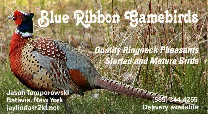 Blue Ribbon Gamebirds Business Card